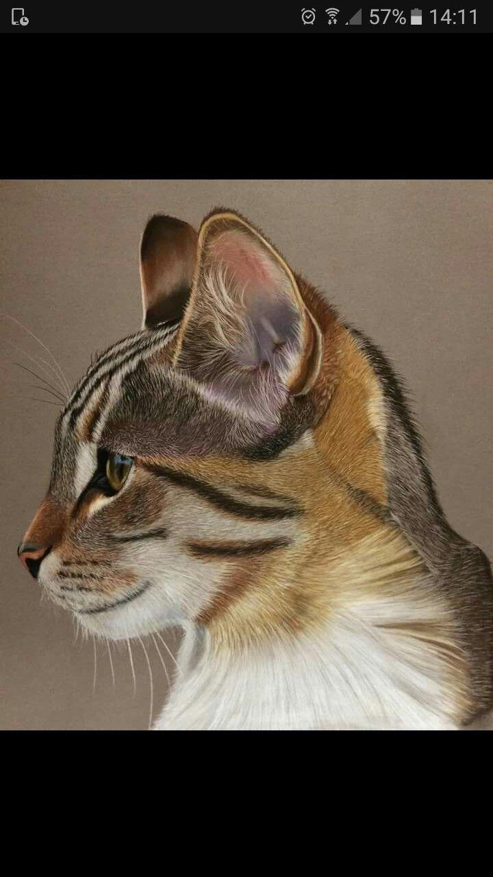 76 besten Katzen Bilder auf Pinterest | Kätzchen, Katzen kunst und ...