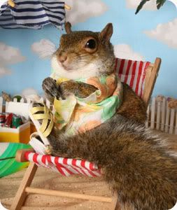 Squirrel Vacation ~ from Everything Squirrels http://www.sonyarae.xtreemhost.com/Everything%20Squirrels/Aparrel/SquirrelAparrel.html#