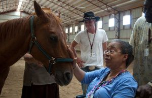 """""""Caring for horses eases symptoms of dementia...people with Alzheimer's were able to safely groom, feed and walk horses under supervision -- and the experience buoyed their mood and made them less likely to resist care or become upset later in the day..."""""""