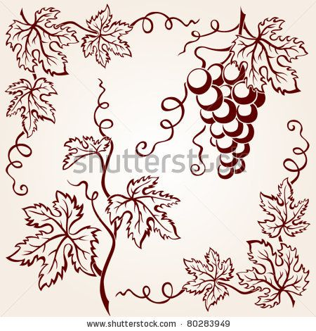 stock vector : Set from vine