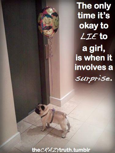 .Pugs Puppies, 3 Pugs, Dogs 3, Balloons Pugs, Funny Pugs, Pugs Dogs, Pugs Mi Unhealthy, Crazy Truths, Surpris Surpris
