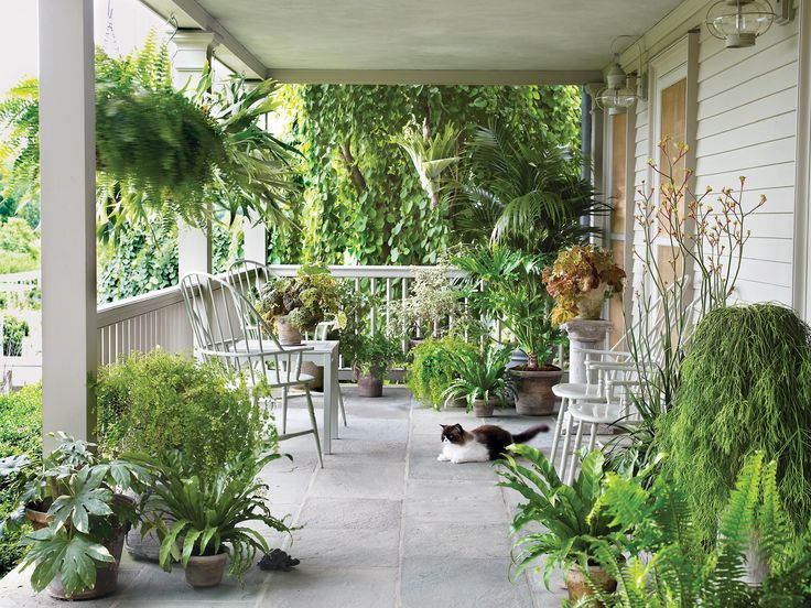10 porch plants you need this spring.