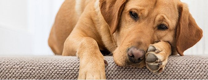 Allergies in Dogs & Cats  Just like people, allergies are not uncommon in our pets and any cat or dog can develop allergies at any time during their lives, therefor it's important to be aware of any signs and symptoms which alert you that your pet is having an allergic reaction.  https://www.epetstore.co.za/allergies-in-dogs-and-cats