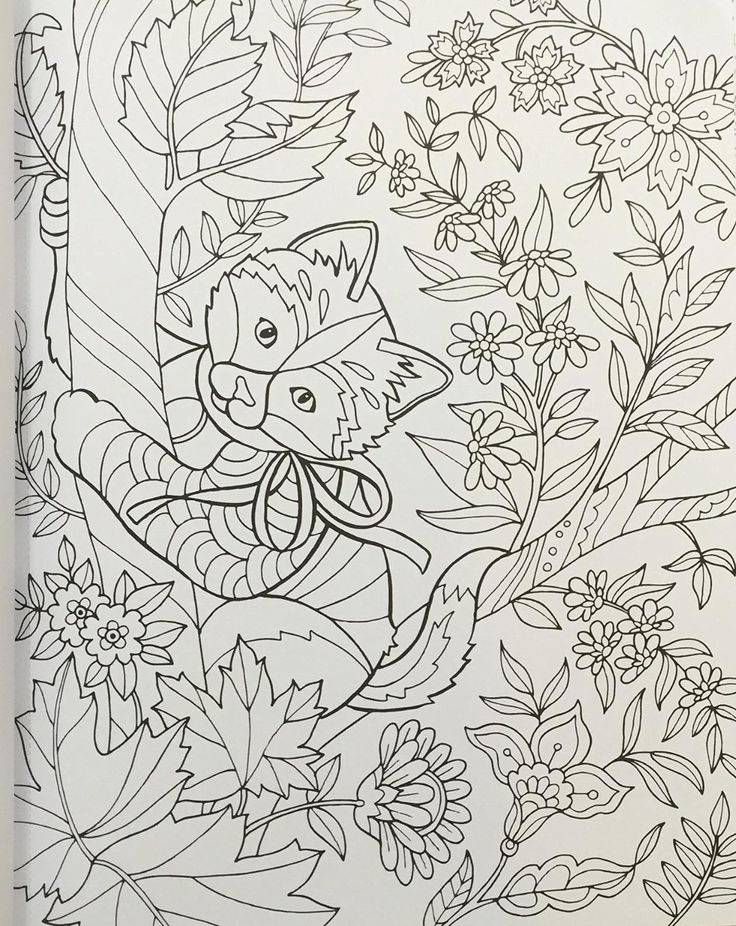 amazoncom color super cute animals 0035313666476 jane maday books - Super Cute Animal Coloring Pages