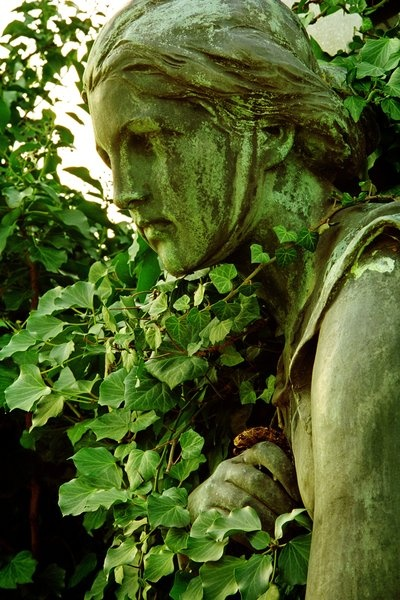 Magickal properties: IVY is carried by women (and brides) for good luck. Wherever it is grown or strewn, it guards against negativity and disaster. Use ivy in fidelity and love charms. Ivy is magickally paired with Holly.