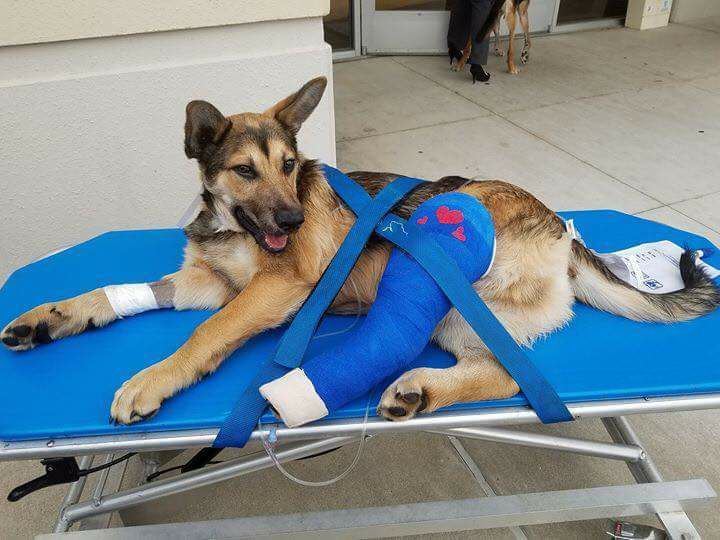 German Shepherd Dog Dog For Adoption In Stephens City Va Adn