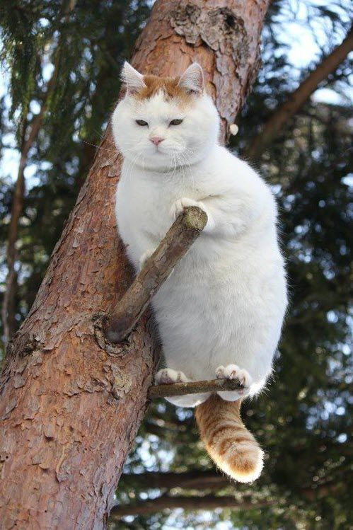 Perched! What a cool kitty don't you think?