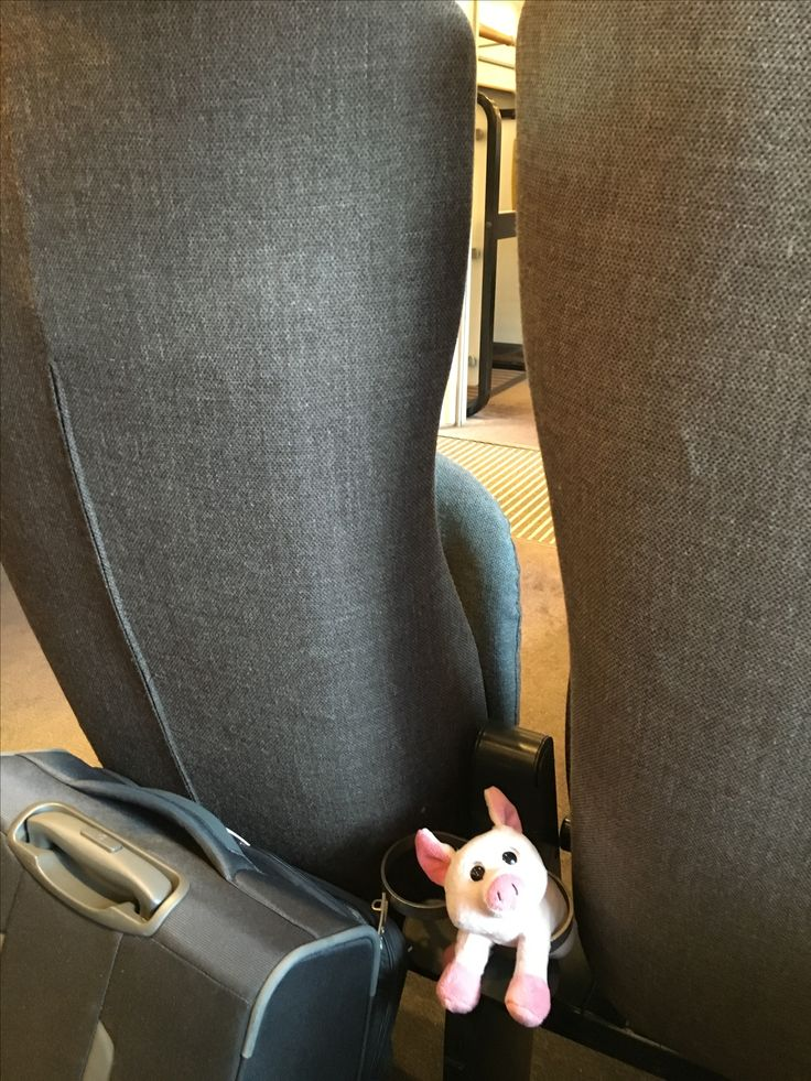"My Travelling pig Sötnos"" on Arlanda express . Today flying to Munich"