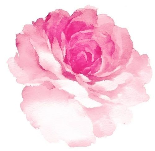 aquarell rose