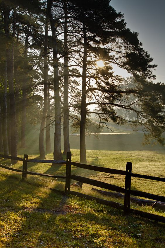 Morning Light by Mike Pistone                                                                                                                                                                                 More