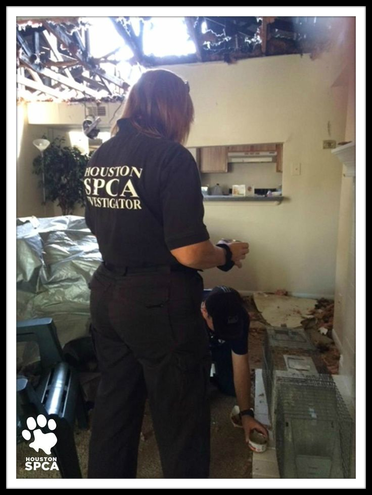 The Houston Spca Is On The Scene Of The Polo Club On Cranbrook Apartments In Spring To Rescue Animals Displaced By Thursday Night Spca Polo Club Animal Rescue