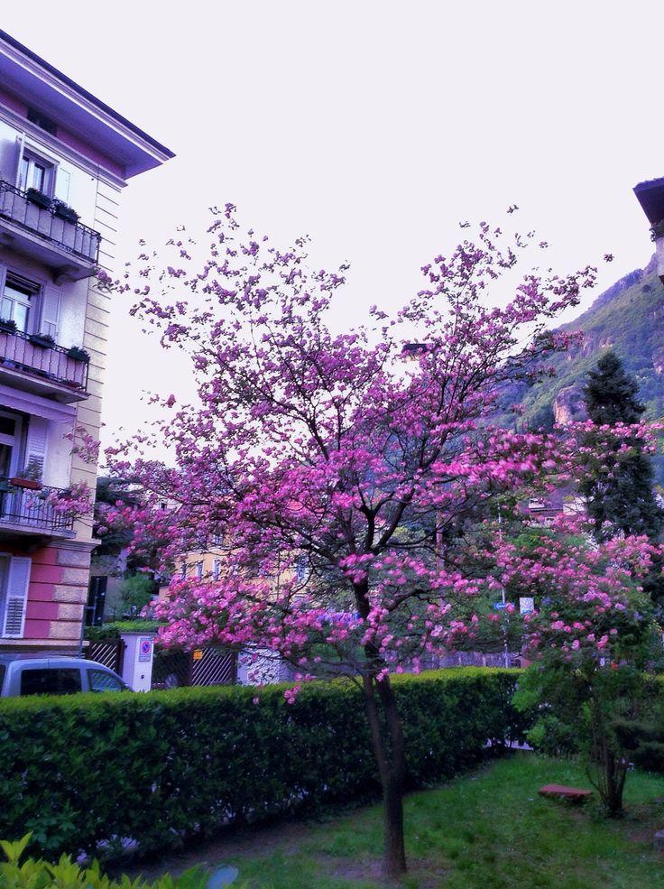 Spring^2
