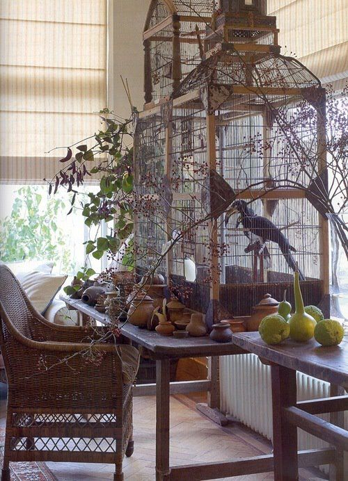big bird cage that Jade, Nimbus, & Bandit would love!
