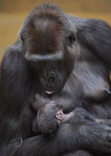 Every mother whether a human or animal loves her child and is mesmerized by their existance.