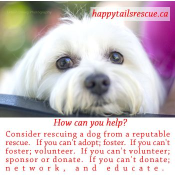 How Can YOU Help?   #rescuedog #rescue #charitytaxreceipt  #smallbreedrescue