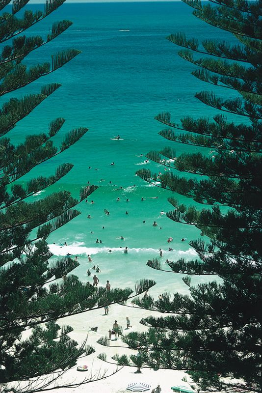 Yamba Main Beach, New South Wales, Australia....typical aussie beach with pine trees