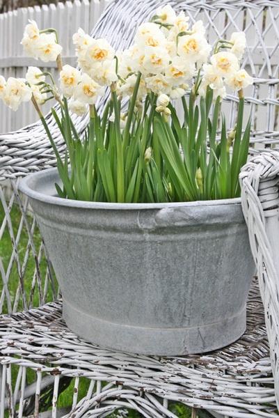 washtub with daffodils, simple and elegant idea for wedding decor