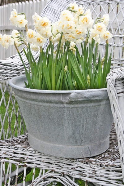 washtub with daffodils, simple and elegant idea for wedding decor