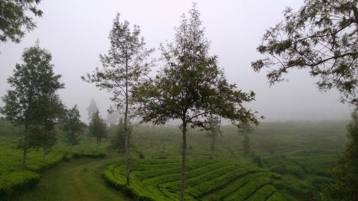 A Misty Evening