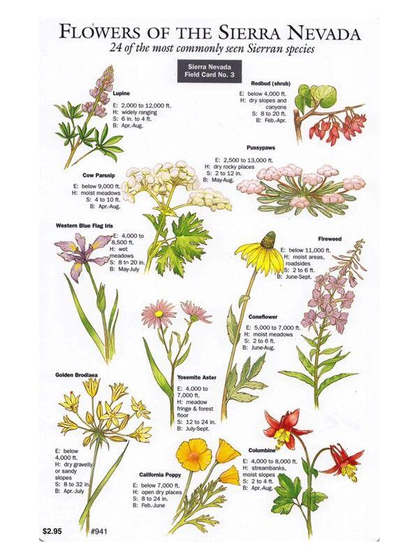 Sierra Nevada Field Card Wildflowers