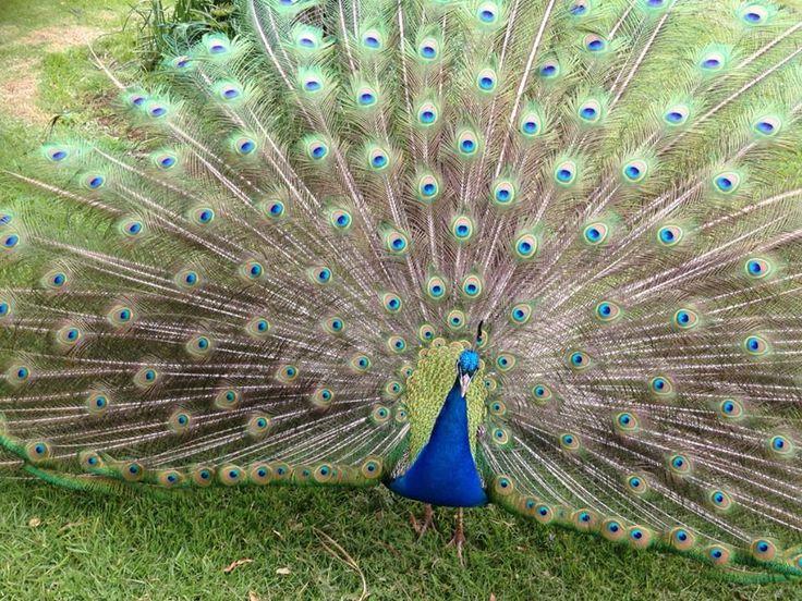 Three Times The Pleasure http://www.robynsweddings.com.au/blog/weddings/three-times-pleasure/