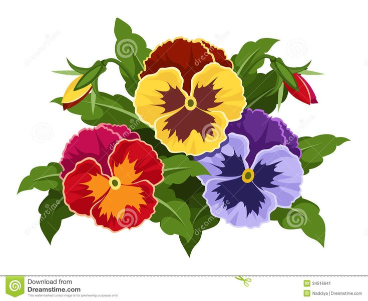 Yellow Pansy Flower With Leaves And Bud Stock Vector - Image: 43682107