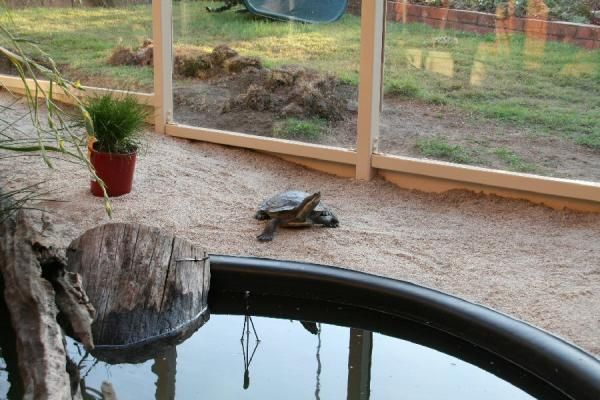 Turtle pond diy google search for the yard pinterest turtles happy and love this Diy indoor turtle pond
