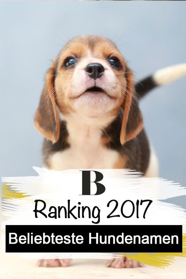 Haufige Hundenamen 2017 So Niedlich Heisst Dein Hund Bello Oder