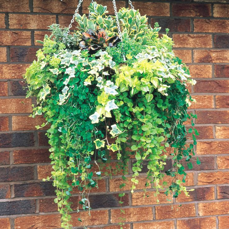 25 best ideas about winter hanging baskets on pinterest. Black Bedroom Furniture Sets. Home Design Ideas