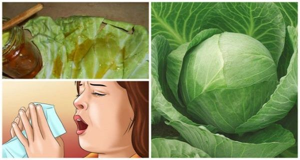"""The Fastest Cure for Chronic Coughs and Bronchitis: """"Pull Off"""" Your Disease with a Super-Wrap Made from Cabbage Leaves and Honey!"""