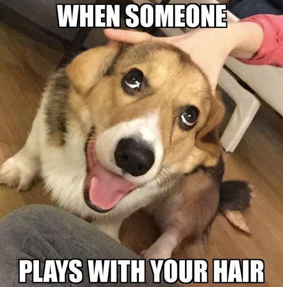 30 zufällige lustige Tier Meme, die Sie LOL machen