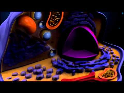 Cell Structure and Function video--how cells fit into big picture, city analogy for organelles' functions/jobs, etc....Mamunur Rashid 5:59 min