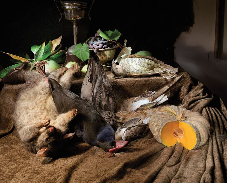 marion drew- taxidermy still life. what's not to love?