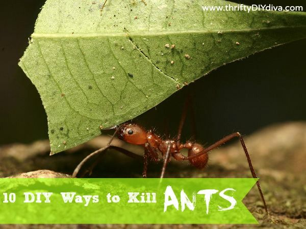Top 10 DIY Ways To Get Rid of Ants - from cucumbers to boric acid, it's covered here!