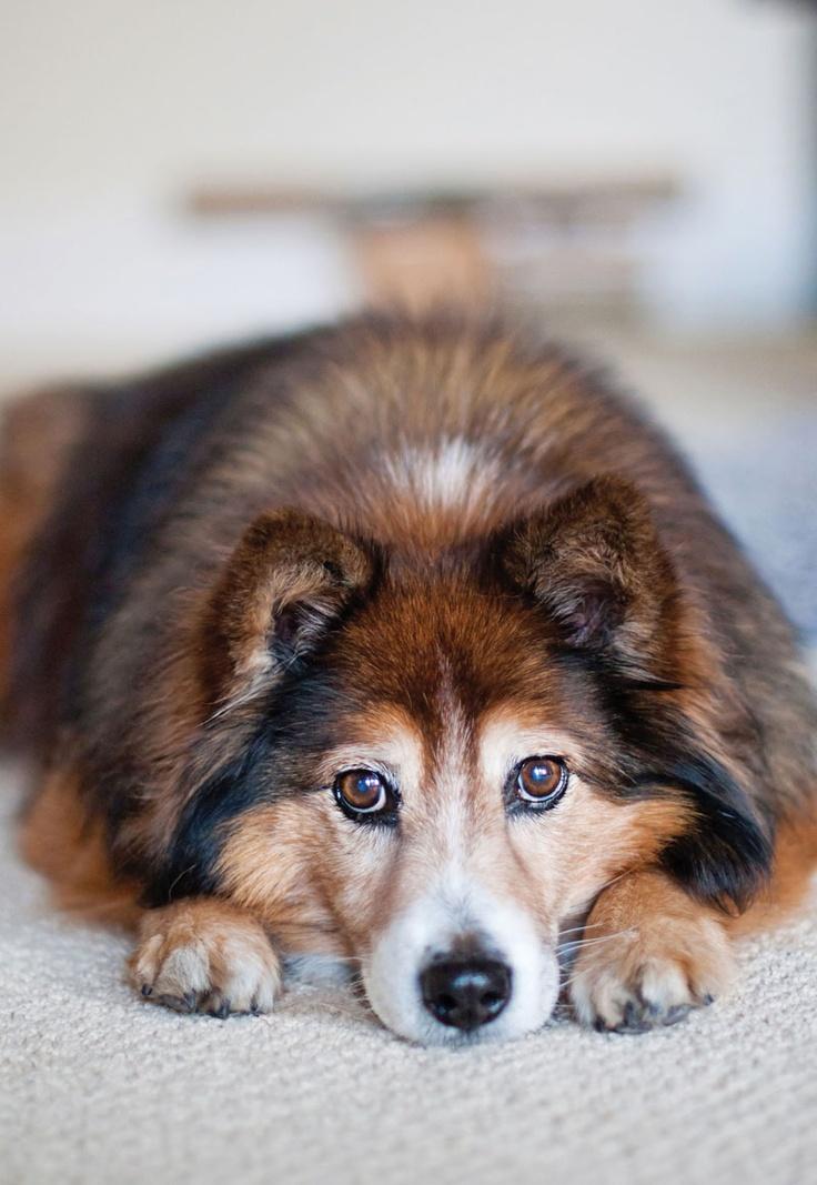 Anxiété de séparation ou pourquoi mon chien ne peut rester seul?