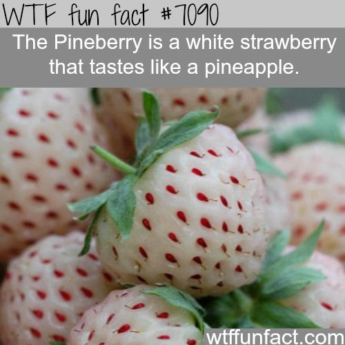 The Pineberry - WTF fun facts