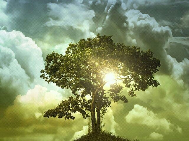 Que pintura, que imagem!: Lights, Amor Photography, Awesome Paintings, Happy, Trees Of Life, Beautiful, Cloud, Trees Pictures, Mothers Natural
