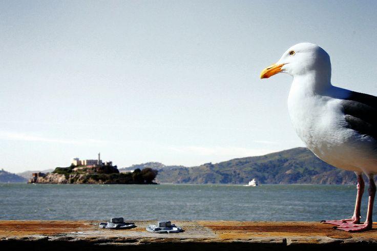 Guardando Alcatraz http://www.ragusanews.com/foto-ragusa/valeria-simola