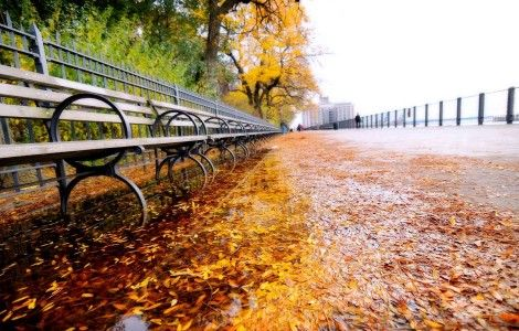 wet day fall leave High Resolution HD wallpaper