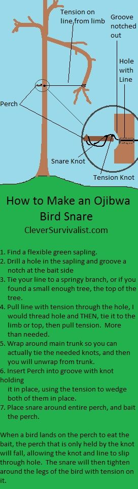 How to Build a Snare Trap 8: Ojibwa- How to catch a Bird July 26, 2013