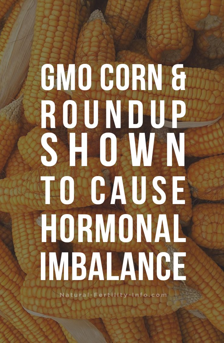 The most recent study on genetically modified foods, shows that long-term consumption of the herbicide Roundup and Roundup tolerant GM corn (maize) may cause hormonal imbalance.     #hormonalimbalance #fertility #naturalfertility #GMO #fertilitydiet #NaturalFertilityInfo #NaturalFertilityShop