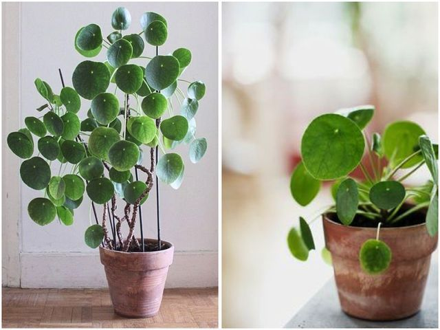 THE INDOOR PLANT BEGINNER'S GUIDE (via Bloglovin.com )