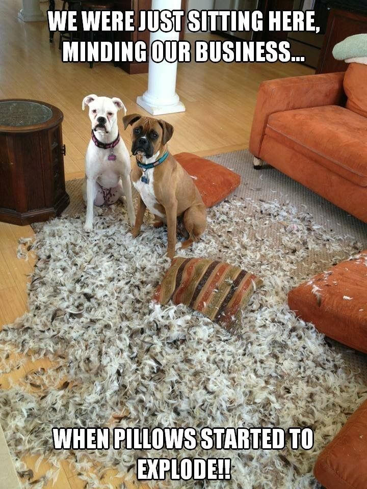 30 Cats And Dogs That May Or May Not Have Made A Huge Mess Boxer