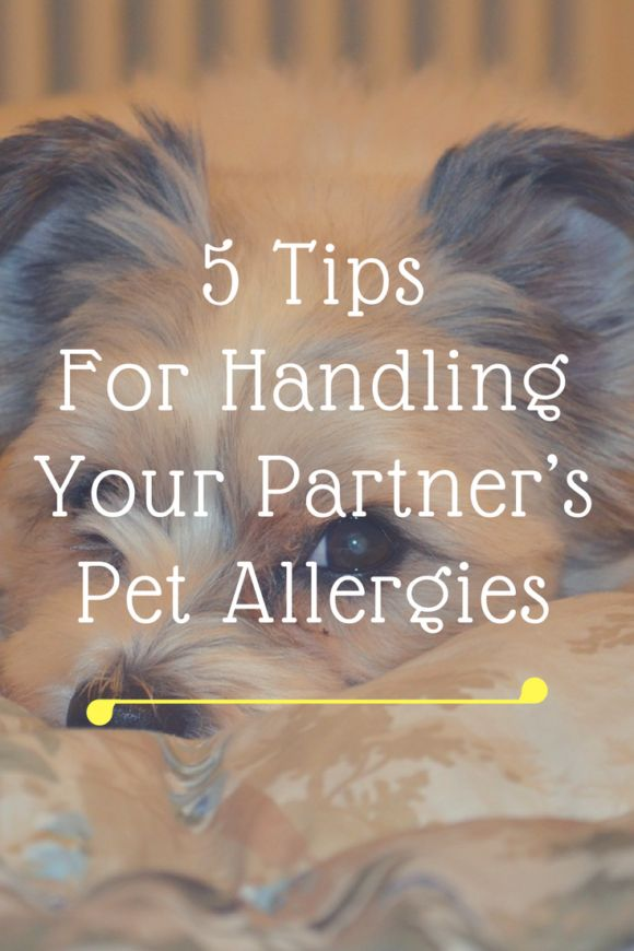 Guest contributor! What to do when your partner is allergic to your animal - tips here!