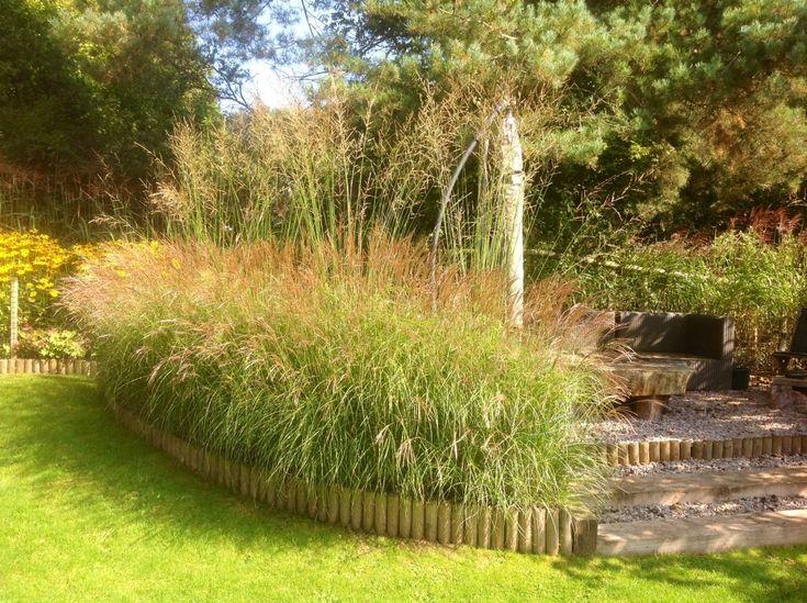 1223 best Ornamental grasses images on Pinterest Ornamental