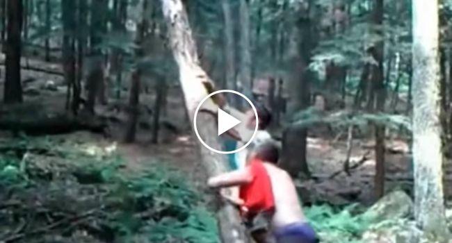 Mãe Natureza Dá Lição a Jovens Depois De Tentarem Derrubar Árvore