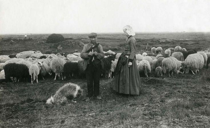 Schaapherder uit de Hondsrug in Drente met zijn kudde schapen, vrouw in klederdracht, schaapsherdershond en breiwerk in de hand. Nederland, 1930 #Drente