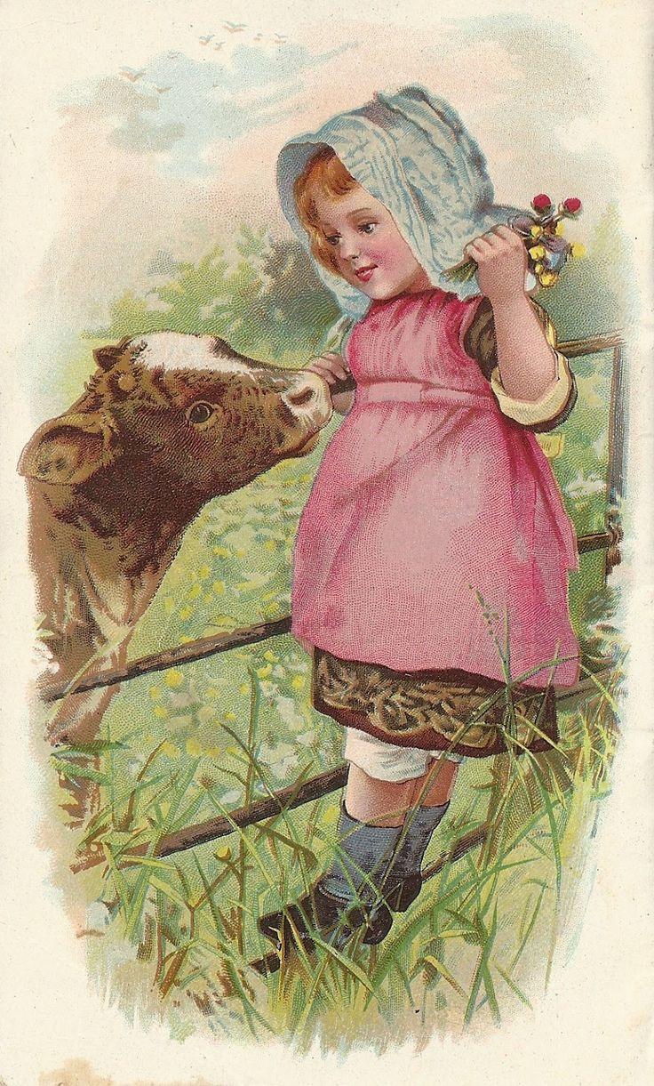 little girl feeding calf