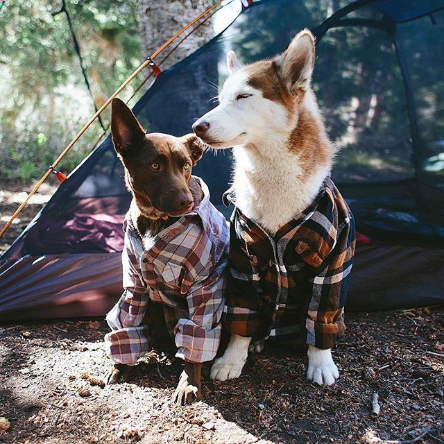 Bros who camp together, stay together. kodiak_thebeardog