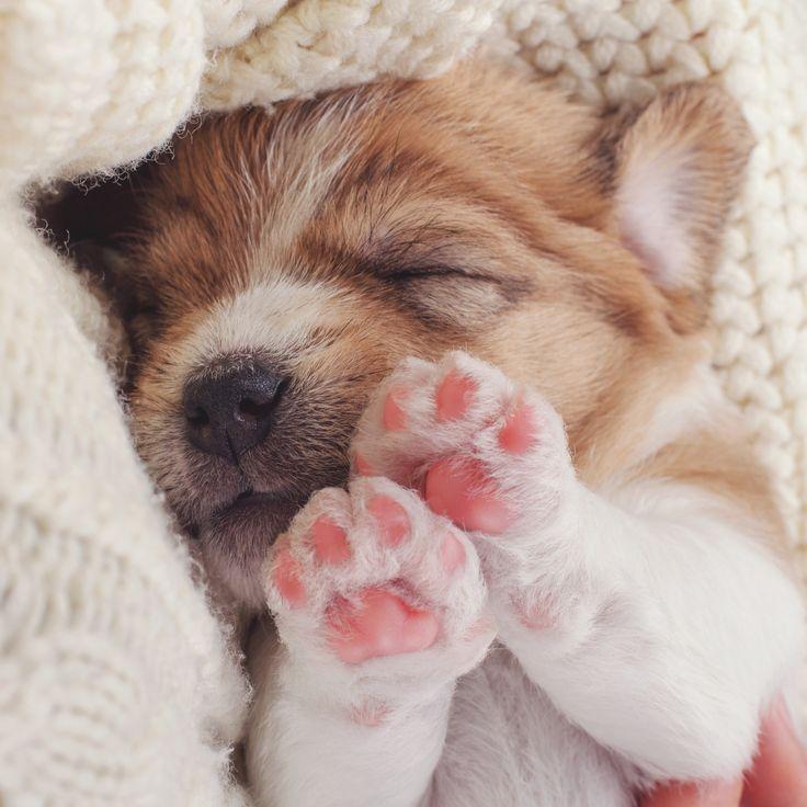 #4EkimHayvanlarıKorumaGünü Kutlu Olsun! Bizi etiketleyerek minik dostlarımızla fotoğrafını paylaşan 5 takipçimiz sürpriz hediye kazanıyor:)